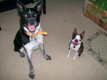 Banjo and Gidget
