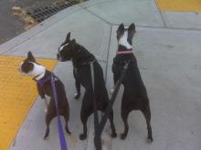 Gidget, Gibson, and Lola
